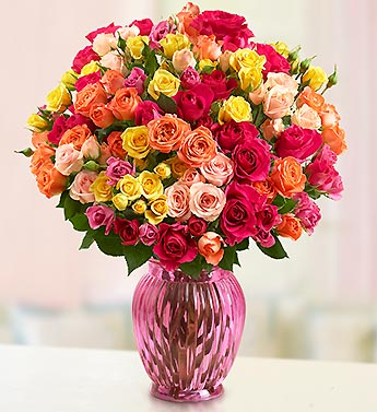 Spray Roses, 50-100 Blooms