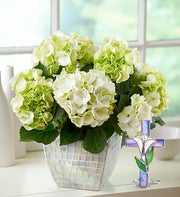 Bountiful Blessings Hydrangea