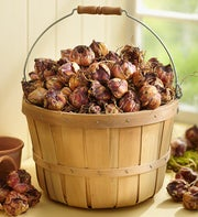 Bushel of Bulbs