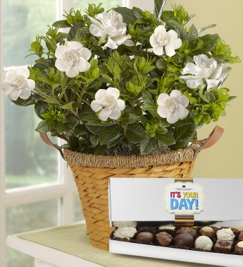 It?s Your Day Gardenia Basket