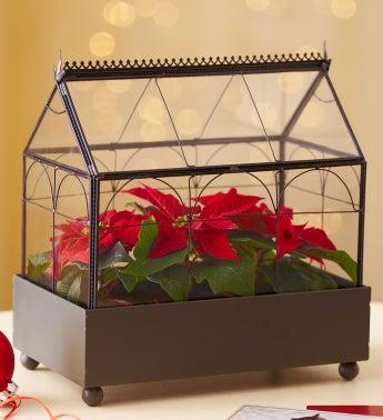Poinsettia Terrarium