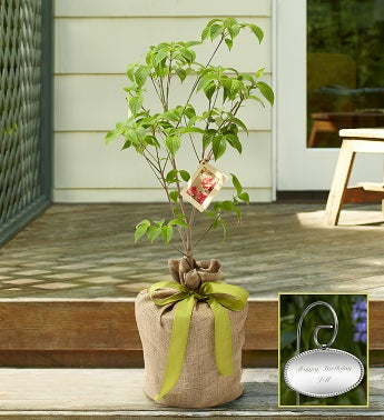 Pink Dogwood Tree with Personalized Plaque