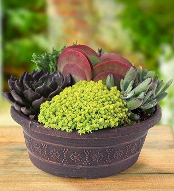 Savvy Succulents� Dish Garden