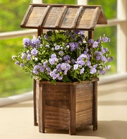 Wishing Well Campanula Plant