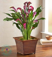 Fall Flame Calla Lily by Real Simple�