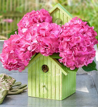 Bird House of Blooms�