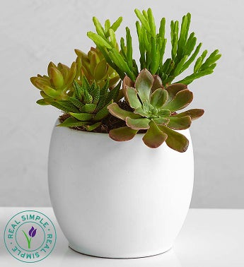 Succulent Garden by Real Simple�