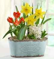Spring Country Bulb Garden + Free Gloves