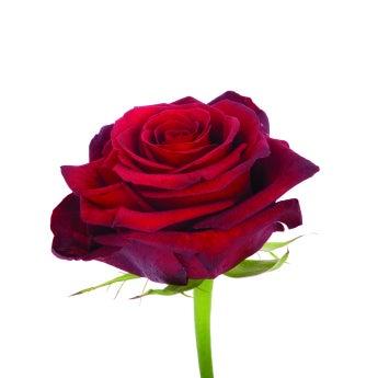 Paris Roses- Special Order!