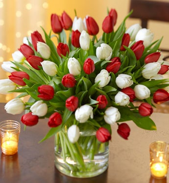 Holiday Tulips, 60 for $50 with Free Vase