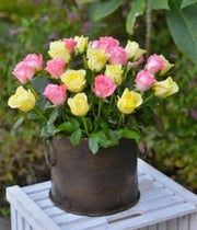 Two Dozen Pink & Yellow Combination Roses