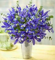 Iris & Eucalyptus