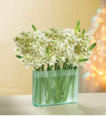 star of bethlehem in a rectangle frosted glass