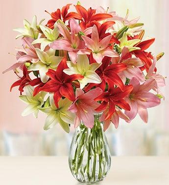 Valentine?s Day Lilies