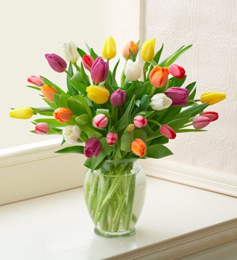 Multicolored Tulips, 20-30 Stems