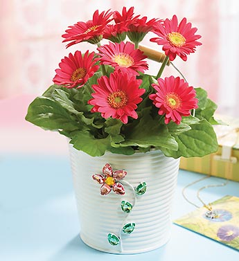 Pink Gerbera in a Jeweled Planter