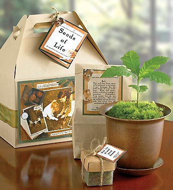 Seeds of Life? Tree Kit for Sympathy
