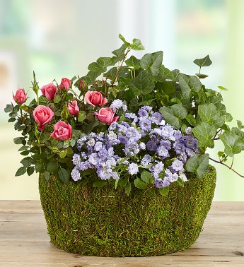 Basket of Spring Plants