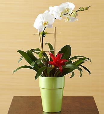 Opulent Orchid Medley