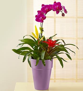 Lavender Orchid Garden