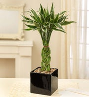 Modern Bamboo