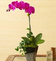 Exotic Magenta Orchid