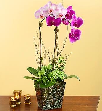 Botanical Orchid Duet