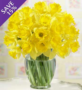 30 stems yellow daffodils