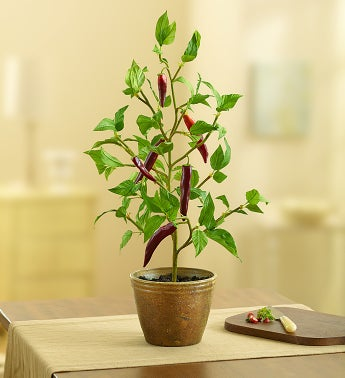 Faux Potted Pepper Plant