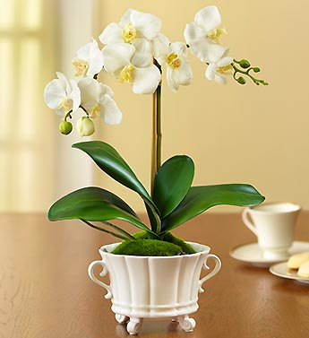 Silk Phalaenopsis Orchid Potted