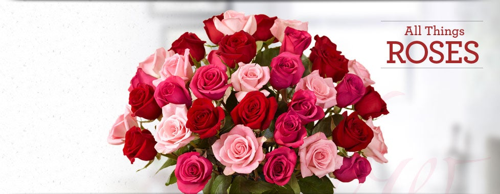 Shop All Roses