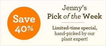 40% Off Jenny's Pick