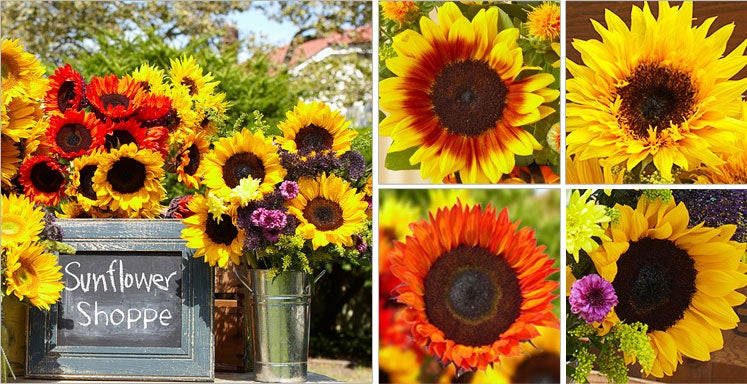 The Sunflower Shoppe